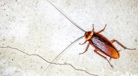 Do Cockroaches Make Noise?