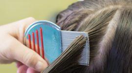 Do Lice Like Clean Hair Or Dirty Hair?