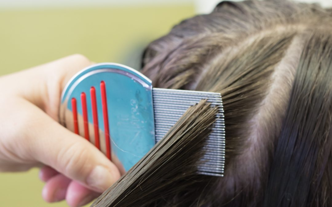 Do Lice Like Clean Hair Or Dirty Hair 2020 - Image By pediatrichairsolutions