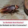 Do Mothballs Repel Roaches?