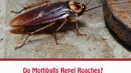 Do Mothballs Repel Roaches?