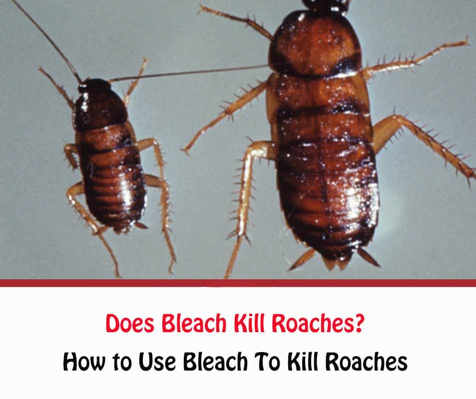 Does Bleach Kill Roaches?