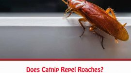 Does Catnip Repel Or Kill Roaches?