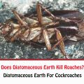 Does Diatomaceous Earth Kill Roaches?