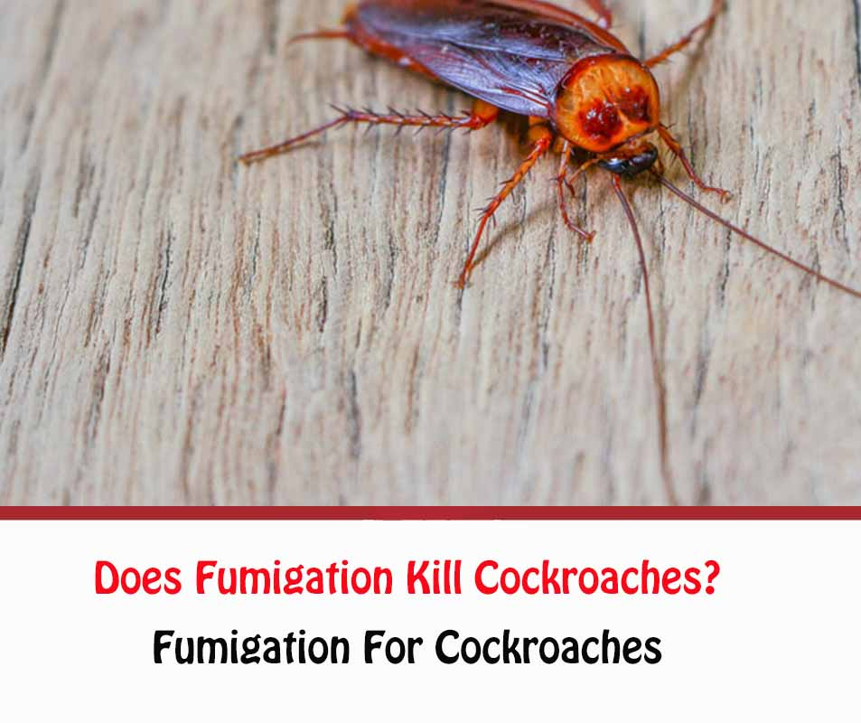 Does Fumigation Kill Cockroaches?