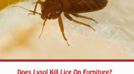 Does Lysol Kill Lice On Furniture?