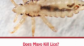 Does Mayo Kill Lice?
