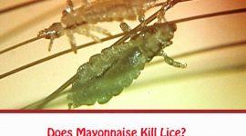 Does Mayonnaise Kill Lice?