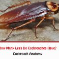 How Many Legs Do Cockroaches Have?