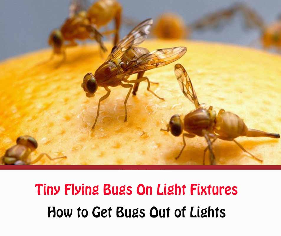 How To Get Rid Of Tiny Flying Bugs On Light Fixtures