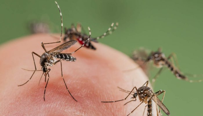 How To Lure A Mosquito Out of Hiding In Your Bedroom - Image By phila.gov