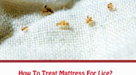How To Treat Mattress For Lice?