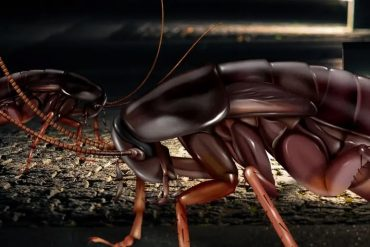 How to Get Rid of Black Roaches Naturally