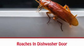 How To Get Rid of Roaches In Dishwasher Door?