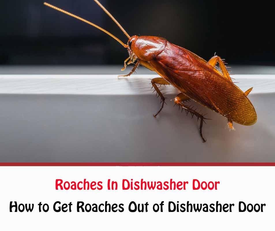 Roaches In Dishwasher Door