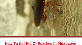 How To Get Rid Of Roaches In Microwave