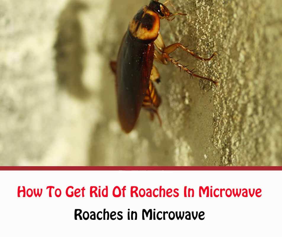 Roaches in Microwave