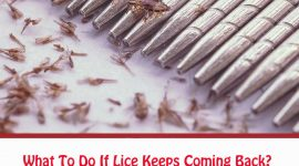 What To Do If Lice Keeps Coming Back?