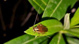 Do Roaches Jump Like Crickets?