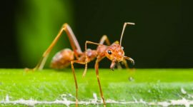 Are Ants Good for Plants in Your Garden?