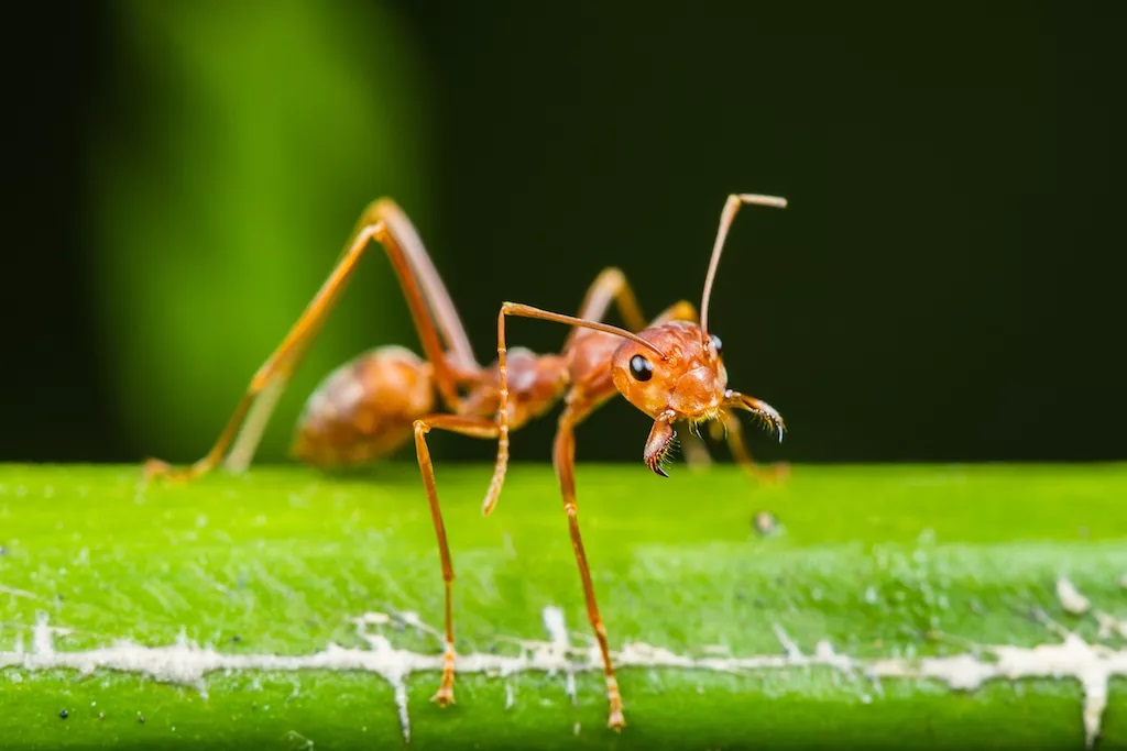 Are Ants Good for Plants in Your Garden 2021 - Image By livescience