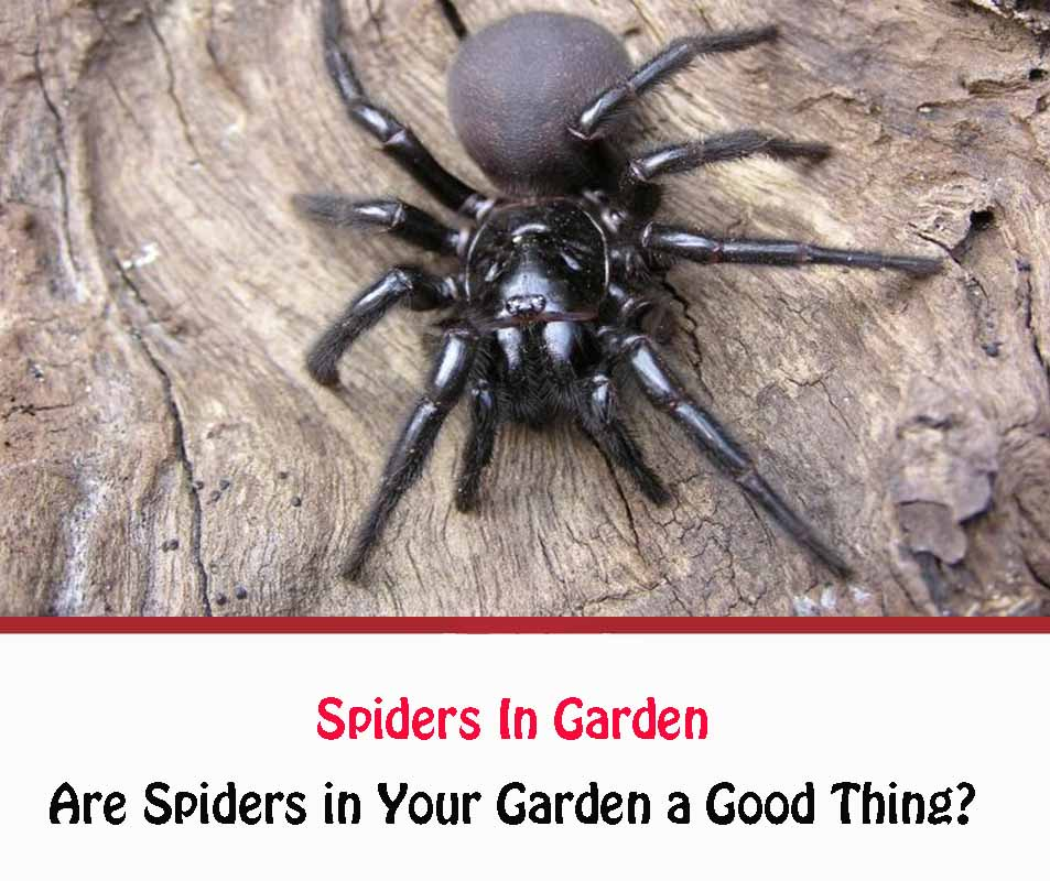 Are Spiders in My Garden a Good or Bad Thing