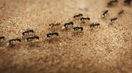 Are Ants Attracted to Heat?