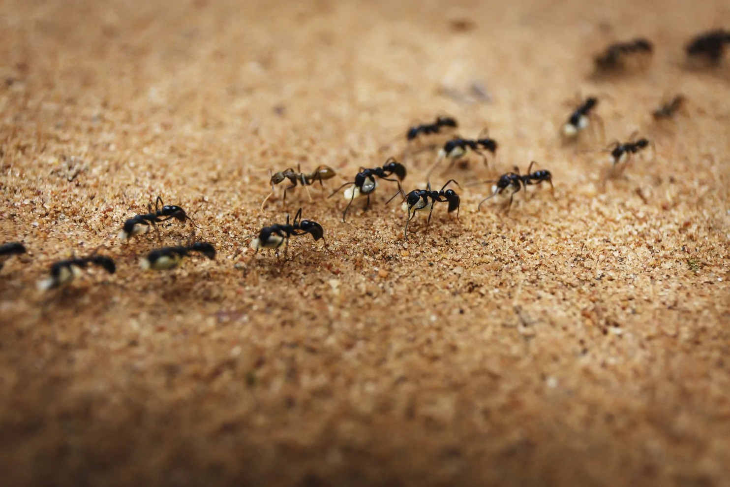 Are ants attracted to heat 2021 - Image By washingtonpost