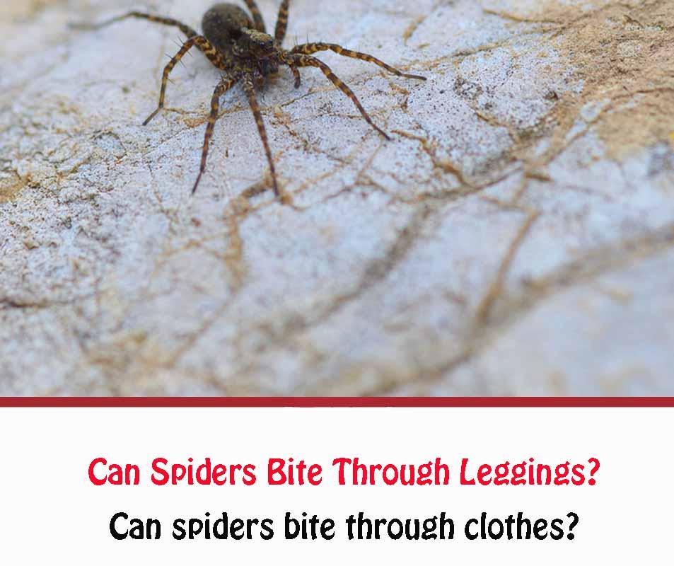 Can Spiders Bite Through Leggings