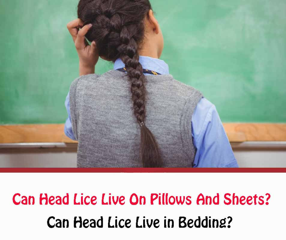Can head lice live in bedding?