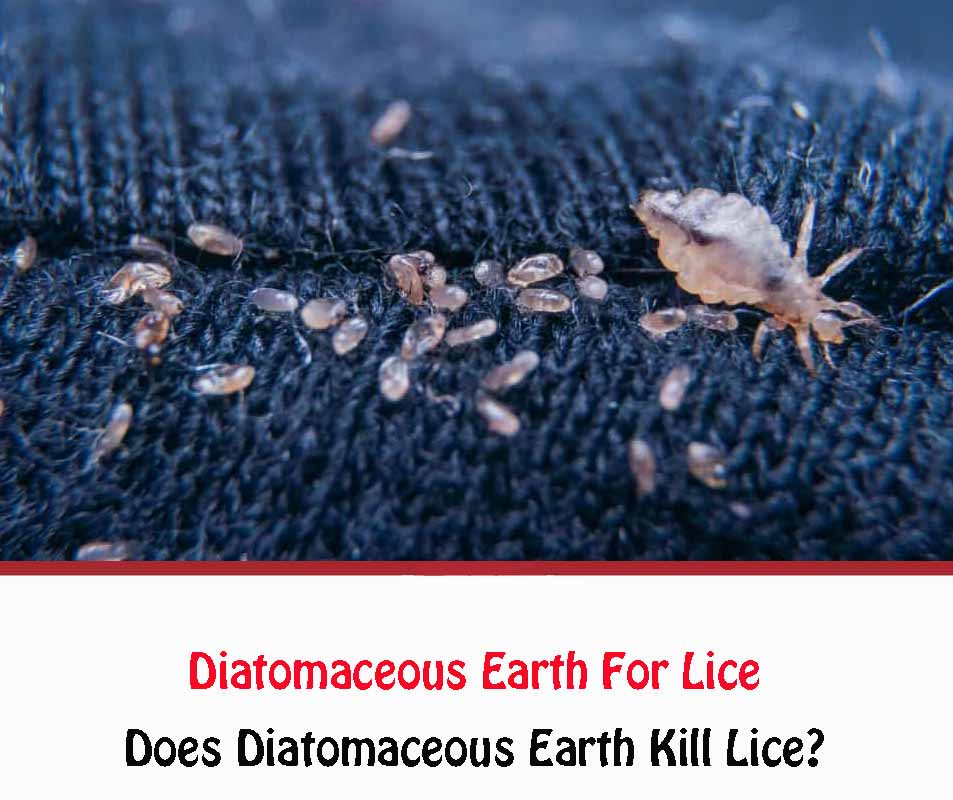 Diatomaceous Earth For Lice