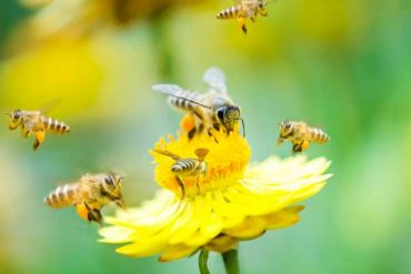 Do Dryer Sheets Repel Bees?