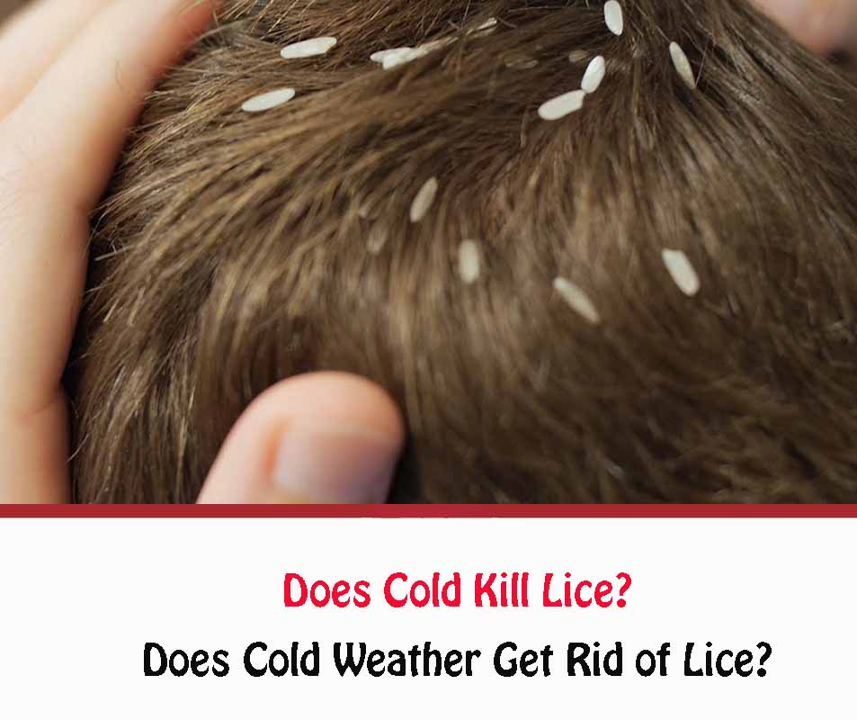 Does Cold Weather Kill Lice