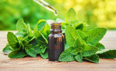 Peppermint Oil For Spiders: How Does Peppermint Oil Influence Spiders