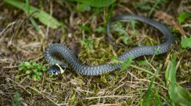 Does Vinegar Keep Snakes Away?