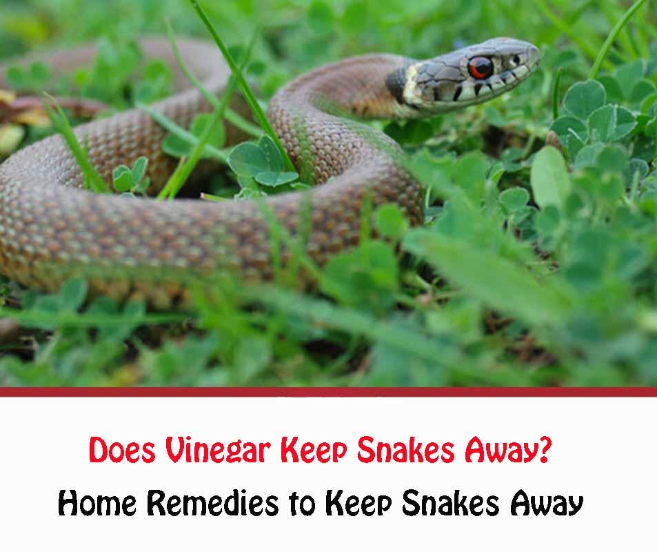 Does Vinegar Keep Snakes Away