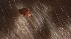 Does Cold Kill Lice?