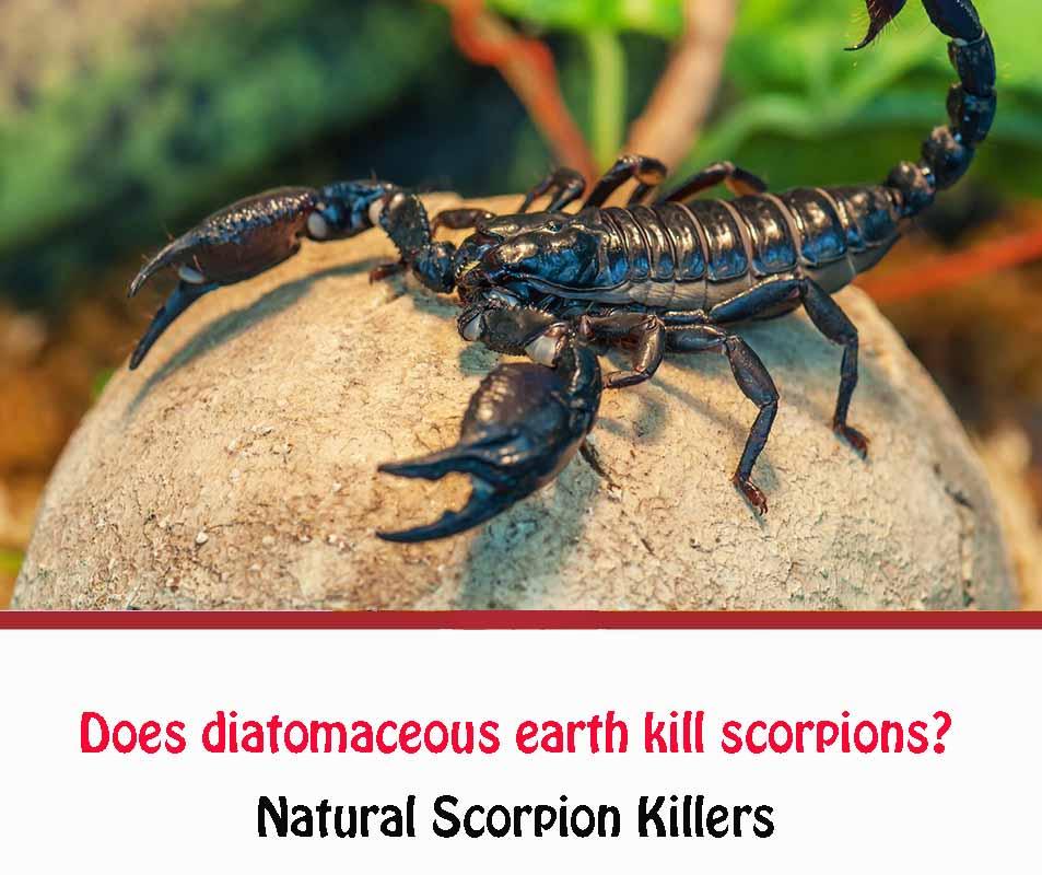 Does diatomaceous earth kill scorpions