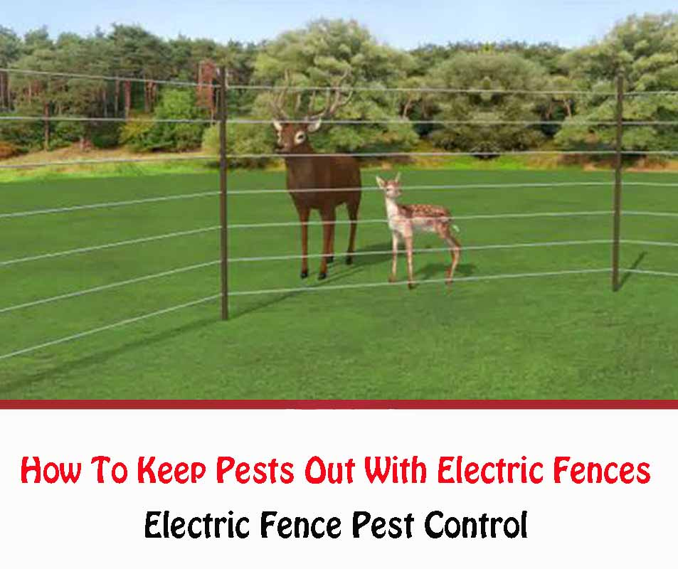 Electric Fence Pest Control