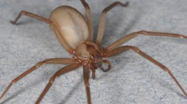 How to Use Essential Oils To Get Rid Of Spiders