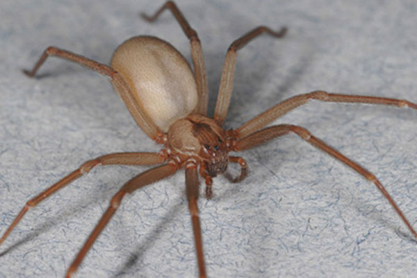 Essential Oil To Get Rid Of Spiders - Image By livescience