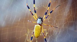 How To Get Rid Of Banana Spiders Naturally