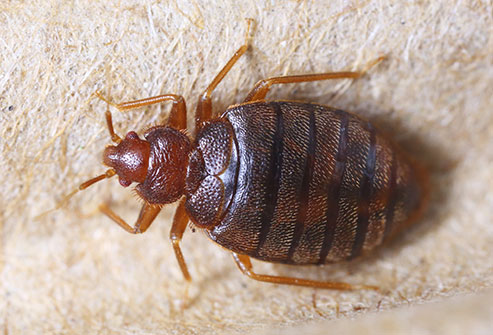 How To Get Rid Of Lice On Furniture Naturally 2021