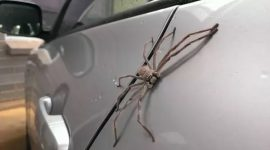 How To Get Rid Of Spiders In A Car Naturally