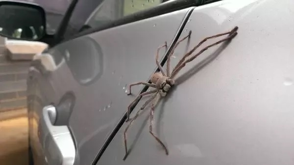 How To Get Rid Of Spiders In A Car 2020