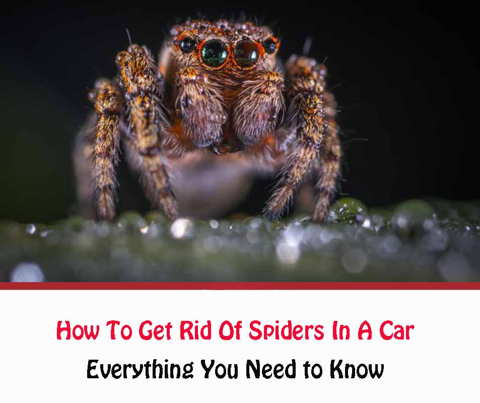 How To Get Rid Of Spiders In A Car