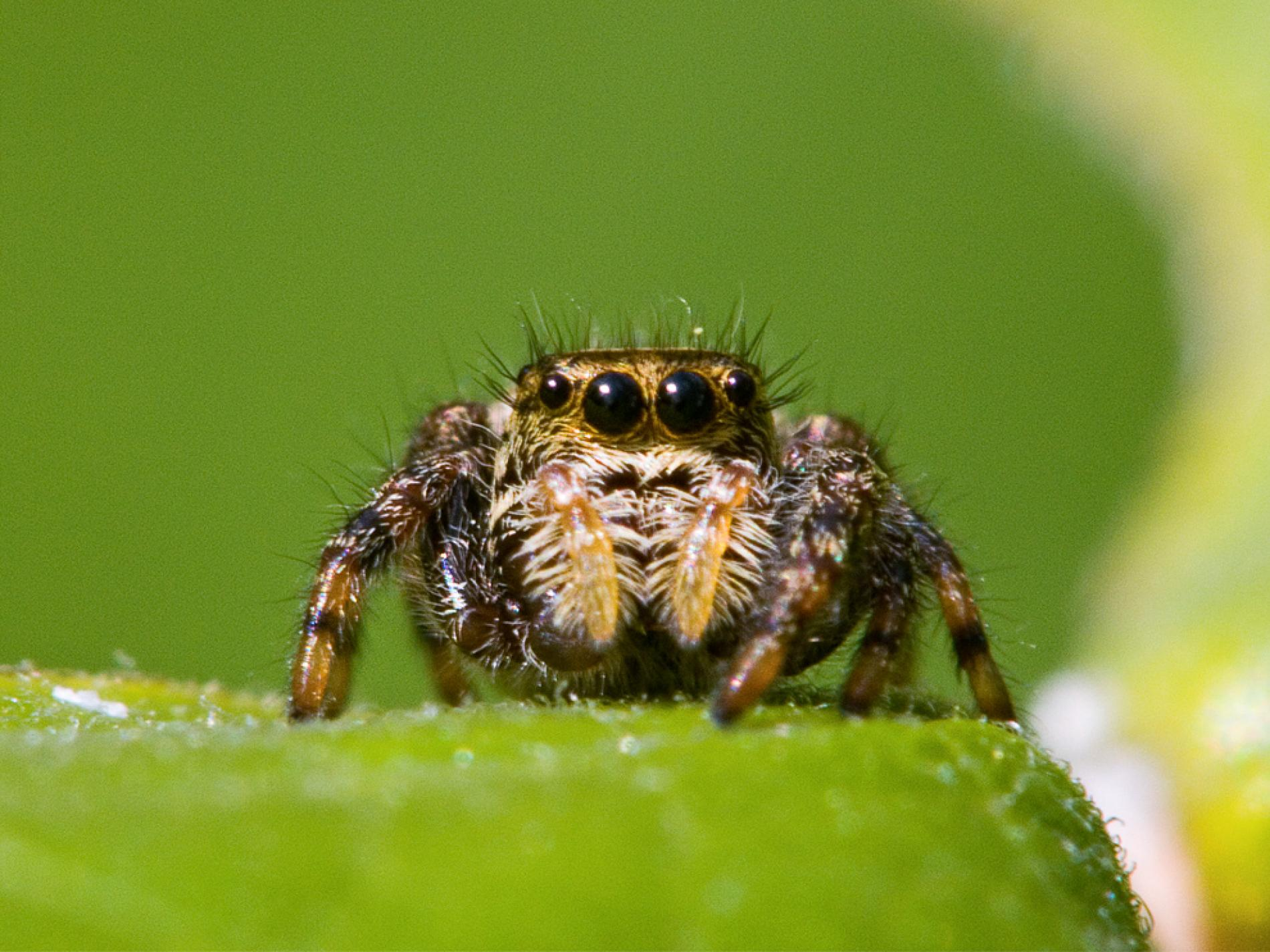 How To Get Rid Of Spiders In The Backyard 2021 - Image By nationalgeographic