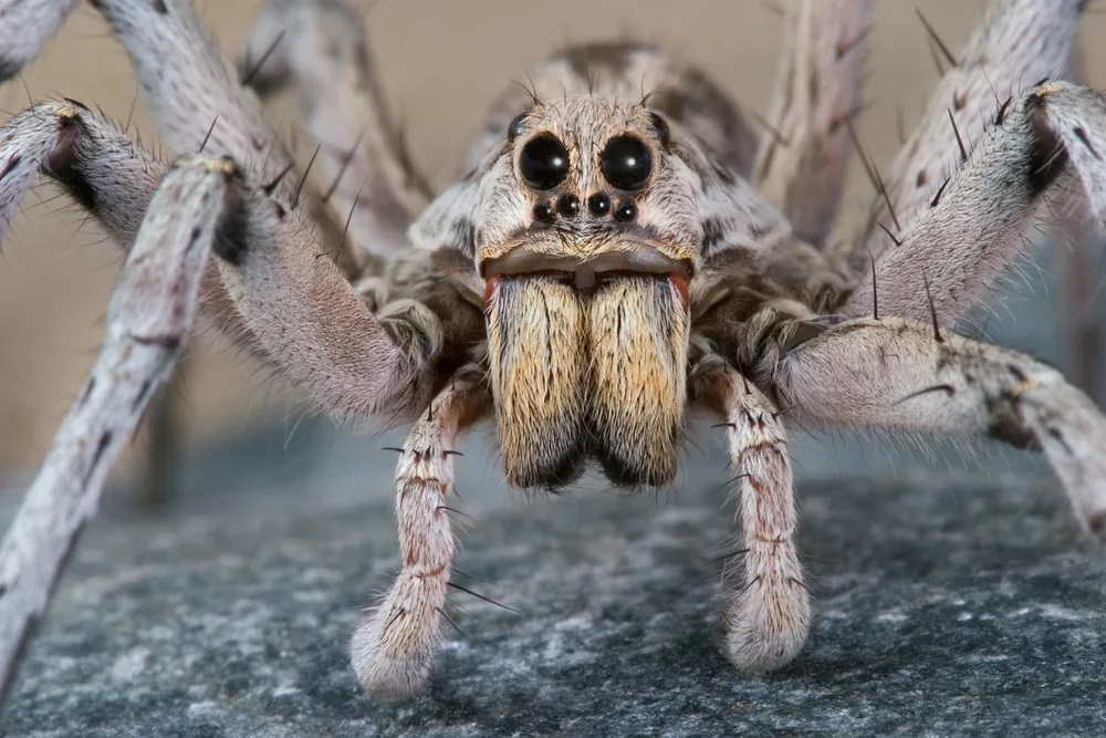 How To Get Rid Of Spiders In Your Bed 2020 - Image By Cathy Keifer