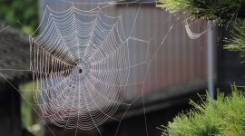 How To Get Rid Of The Baby Spider Nest Naturally