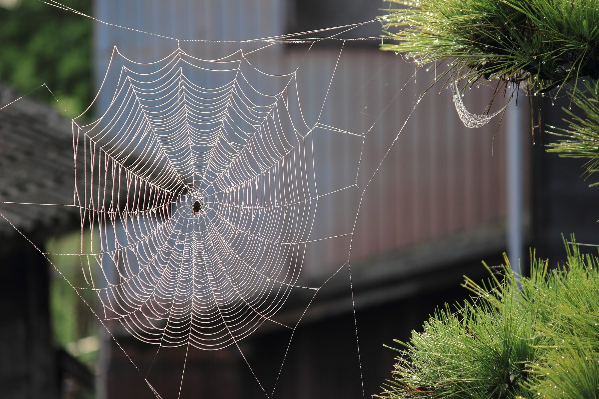 How To Get Rid Of The Baby Spider Nest 2020 - Image By commandpestcontrol